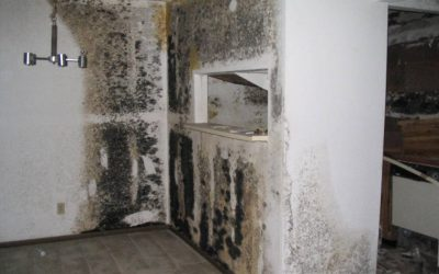 How to prevent mold in your home