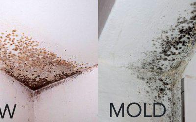 Mold Vs. Mildew