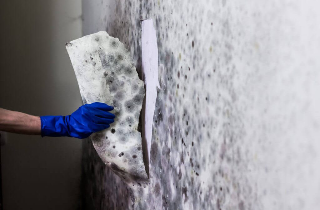 Why Mold grows